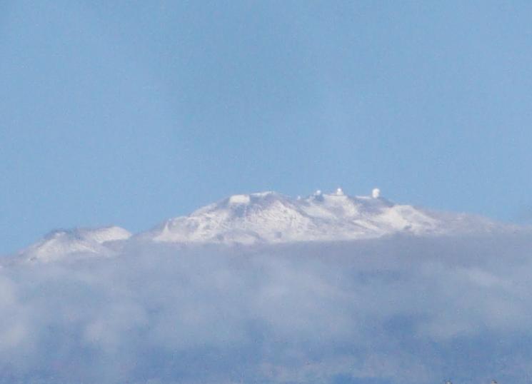 snowKea